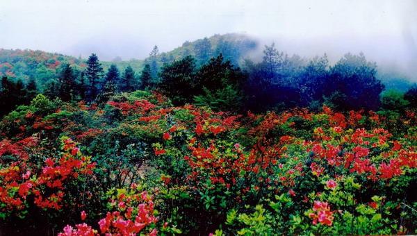 2016大围山国家森林公园门票团购