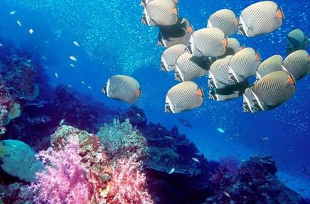 长沙最值得去的地方,长沙海底世界