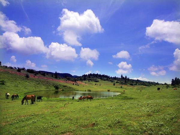 仙女山国家森林公园