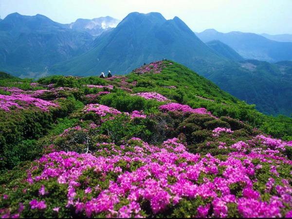 <a href=http://www.akumal-rentals.com/vjingdian_1832.html><a href=http://www.97616.net/vjingdian_1831.html>毕节</a>百里杜鹃</a>