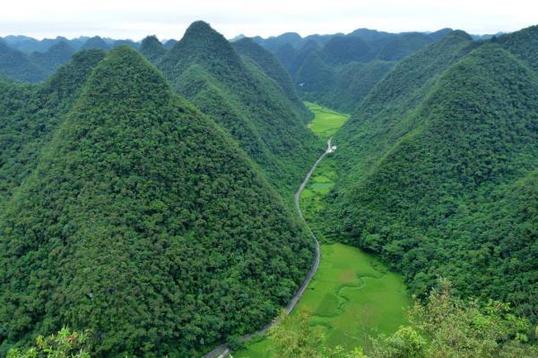 茂兰喀斯特森林