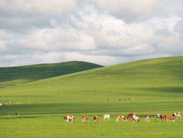 6月国内去草原到哪里旅游地点推荐(乌拉盖草原+呼伦贝尔草原+那拉提草原)