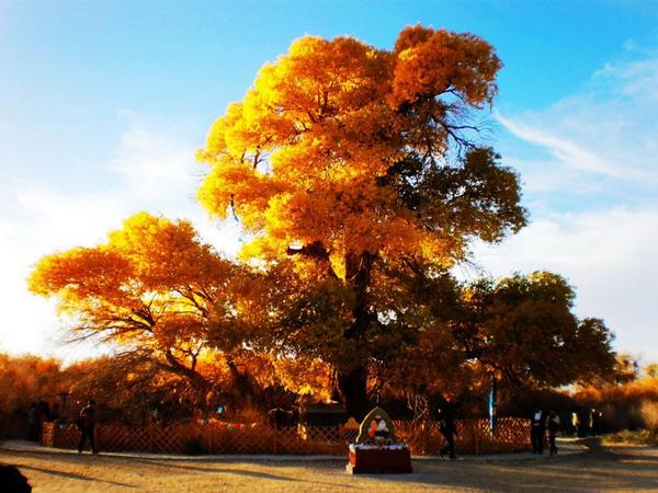 <a href=http://www.97616.net/vjingdian_2072.html>额济纳神树</a>