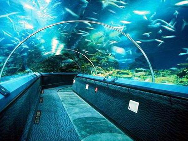 齐河海底世界门票多少钱?泉城海洋极地世界门票儿童/老人优惠
