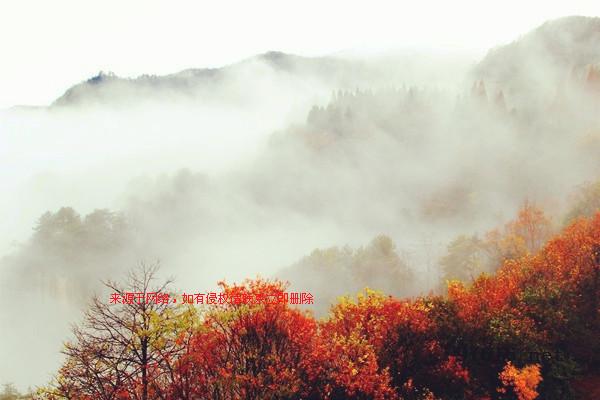 张家界天子山连绵冬雨现旷世云雾仙景