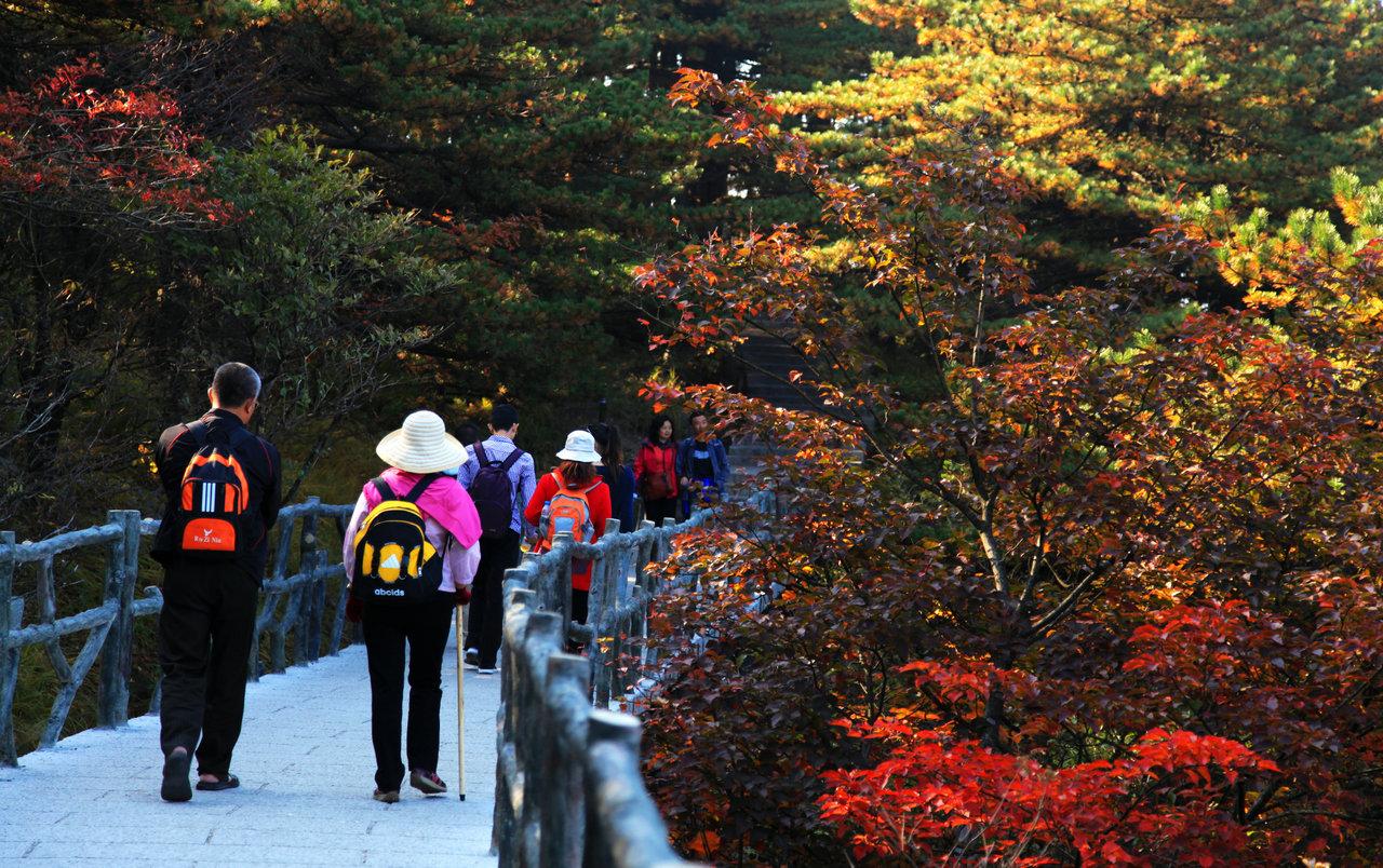 黄山秋季美景图片