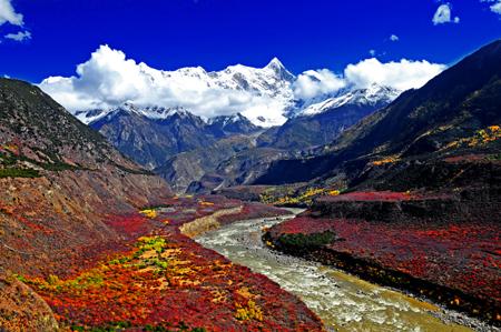 6月份适合去哪里旅游:西藏林芝色季拉山 高原杜鹃遍地开