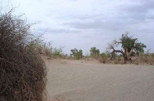 湾腰墩自然保护区