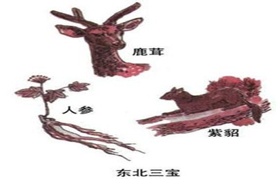 <a href=http://www.97616.net/changshadaodongbeilvyou/>东北</a>三宝