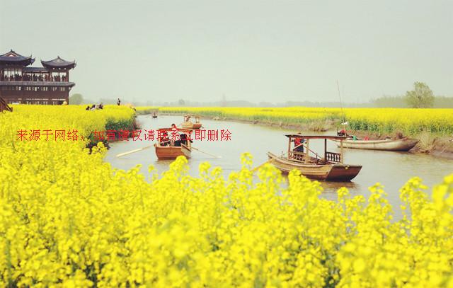 2016江苏兴化油菜花什么时候开?千岛花海间的苏北小调