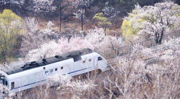 开往春天的列车 和谐号穿越花海