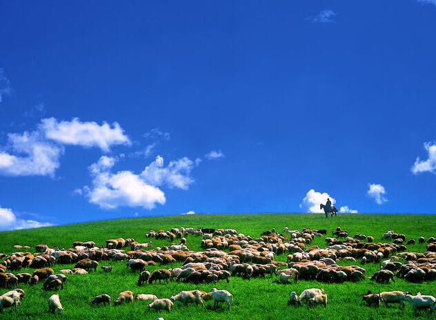 长沙到内蒙古呼伦贝尔大草原、满洲里、魅力名