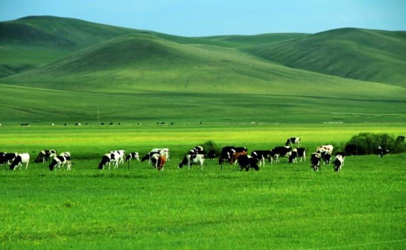 内蒙古呼伦贝尔大草原旅游攻略