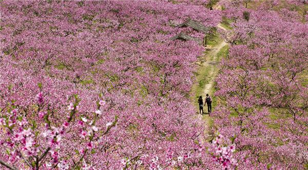 大围山国家森林公园美景图片