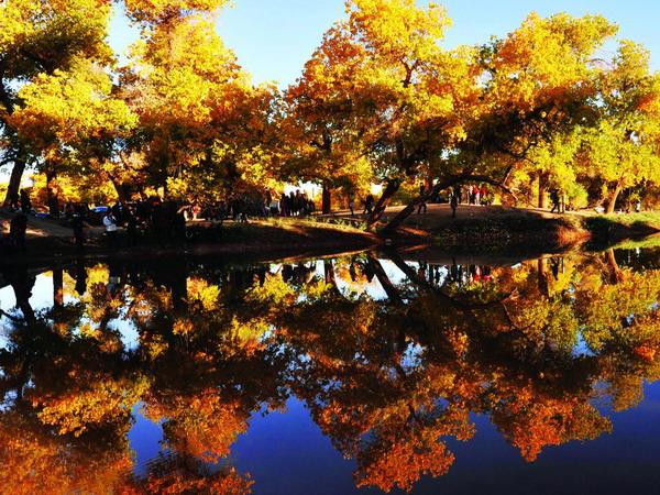 【摄影观光】从长沙到内蒙古额济纳-胡杨林-神树-居延海-怪树林-黑水城双飞5日游