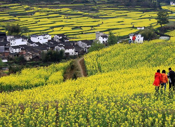 长沙到江西龙虎山、婺源、景德镇、三清山火车专列五日游旅游