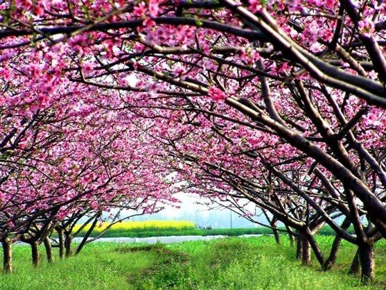 从长沙到常德桃花源一日游