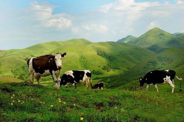 长沙周边游:最迷人的乡间美景旅游景点推荐