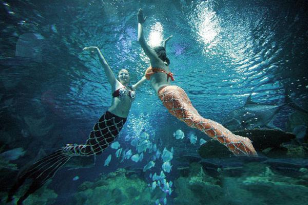 2015富国海底世界门票,北京富国海底世界门票价格是多少钱
