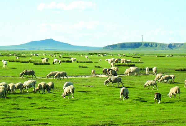 长沙到内蒙古天堂希拉穆仁草原、神奇响沙库布其沙漠、呼和浩特双飞4日游【五星至尊之旅】