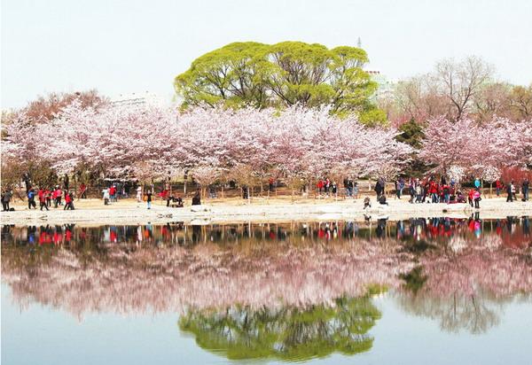 长沙到北京、天津赏樱花美食纯玩品质湖南自组旅游团单飞单卧六日游