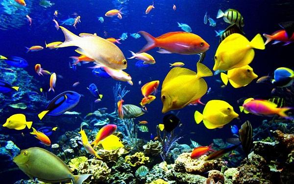 2016长沙海底世界门票,长沙海底世界门票团购,长沙海底世界门票多少钱