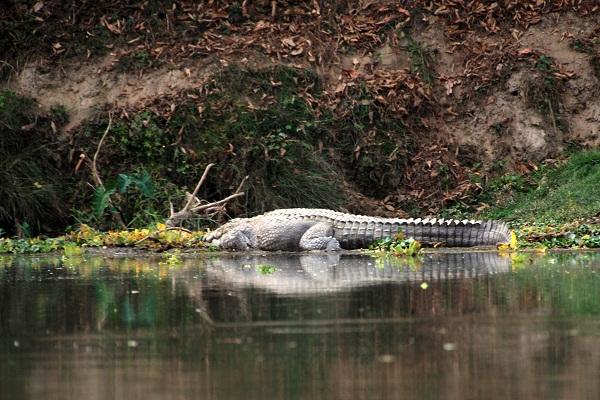 奇特旺国家森林公园