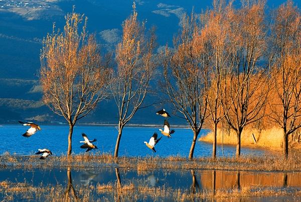 拉市海湿地公园