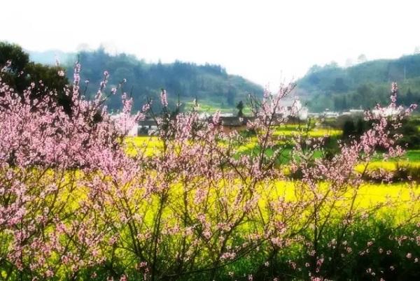 长沙到浏阳周洛大峡谷踏青赏花一日游