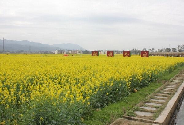 郴州安仁稻田公园