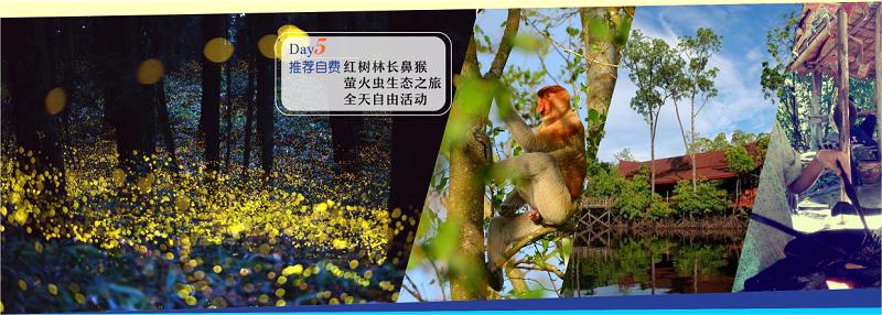 长鼻猴,红树林萤火虫一日游