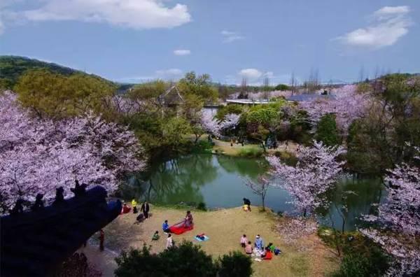 2019年浔龙河樱花谷樱花文化节,预定团购门票