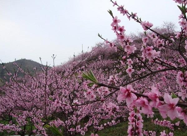 长沙到灰汤东鹜山桃花谷赏花、草莓采摘一日游