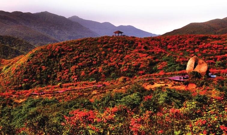 2018年浏阳大围山杜鹃花节时间是?大围山国家森林公园门票价格