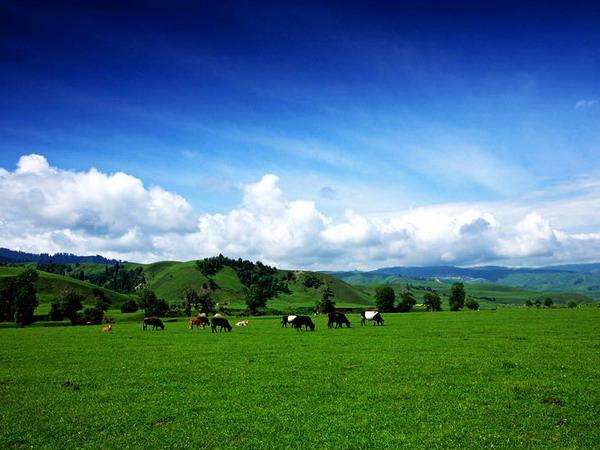 那拉提草原图片